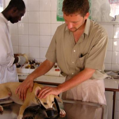 En nuestras prácticas veterinarias en Ghana, un interno ayuda a examinar a un perro.